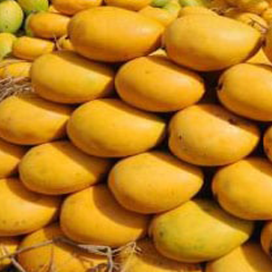 CATEGORY: ANDHRA-TELANGANA MANGOES